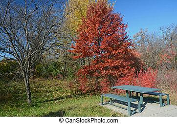 automne, incandescent, minnesota, feuillage