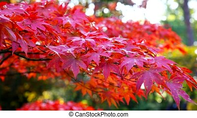 automne, jardin