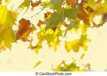 automne, jaune, feuillage, brouillé