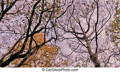 automne, joli, coucher soleil, arbres, au-dessus