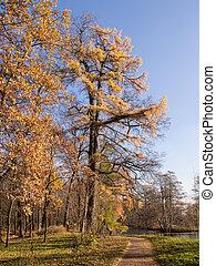 automne, jour ensoleillé, paysage