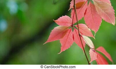 automne, jour pluvieux