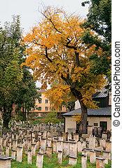 automne, juif, cimetière