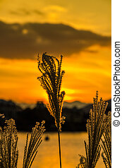 automne, lac, levers de soleil, calme