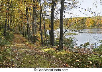 automne, lakeside, sentier