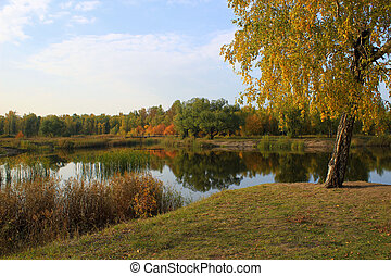 automne, landscape:, étang, dans parc