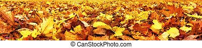 automne, large, super, bannière, feuilles