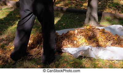 automne, lent, rake., ouvrier, feuilles, parc, jaune, mouvement, collects, utilisation, baissé