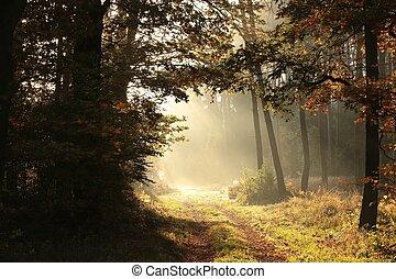 automne, levers de soleil, forêt