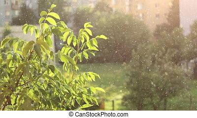 automne, mélangé, ensoleillé, pluie