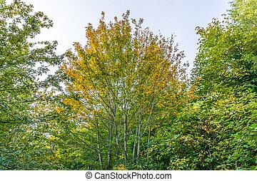 automne, maigre, arbres, 2
