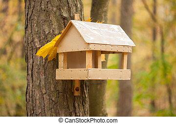 automne, maison, parc, étourneau, arbre