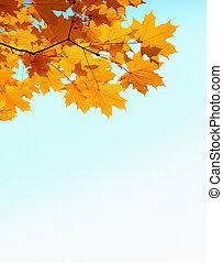 automne, mapple, feuilles