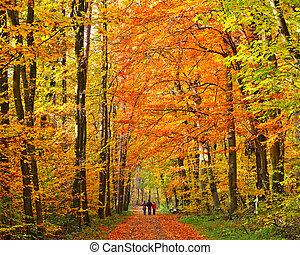 automne, marche, parc