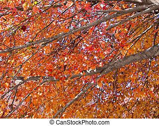 automne, membres