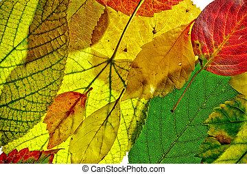 automne, modèle