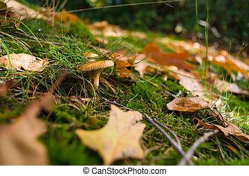 automne, moisissure, feuilles, unique, forêt