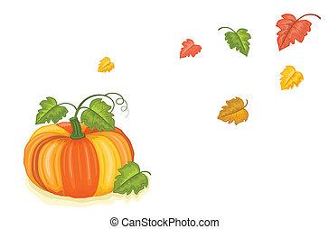 automne, moissonné, fraîchement, citrouille