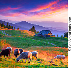 automne, montagne, coucher soleil, village., coloré