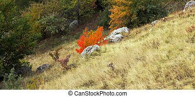 automne, montagne, couleurs, bois