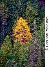 automne, montagne, couleurs, forêt