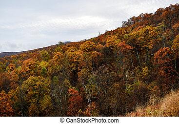 automne, montagne, couleurs, forêts