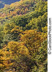 automne, montagne, couleurs