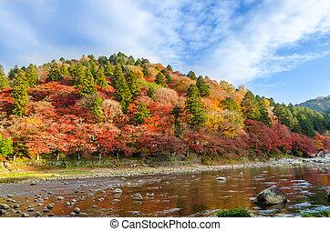 automne, montagne, feuille, coloré