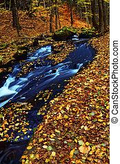 automne, montagne, forêt bois, ruisseau
