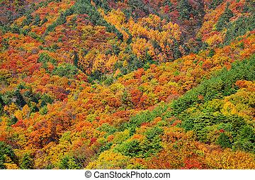 automne, montagne, forêt