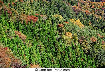 automne, montagne, jungle
