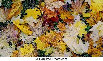 automne, motion., lent, humeur, fond, concept, terrestre, ...
