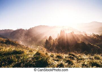 automne, nature., levers de soleil
