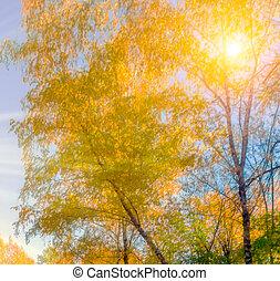 automne, naturel, fond
