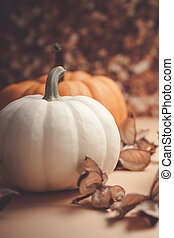 automne, orange, blanc, potirons