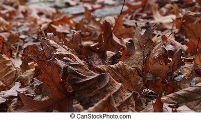 automne, orange, mouvementde va-et-vient, feuilles, vent