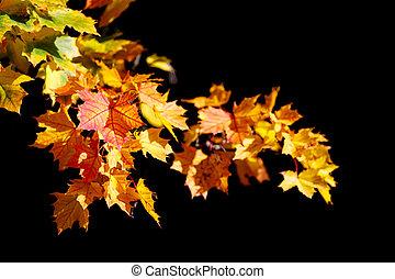automne, orange part, arrière-plan noir