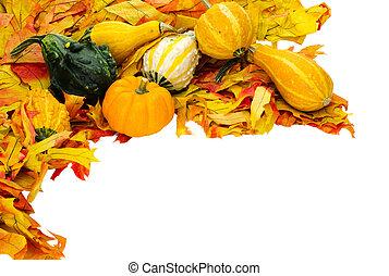 automne, ou, thanksgiving, ou, halloween, décoration, isolé, blanc