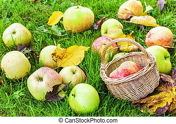 automne, panier, herbe, pommes