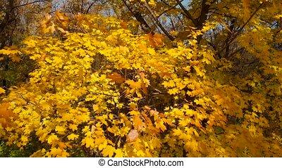 automne, panorama, haut, fin, vertical, feuilles, jaune