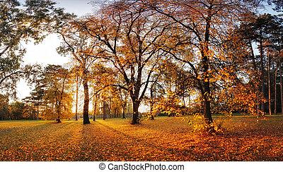 automne, panorama, parc
