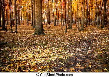 automne panoramique, feuillage