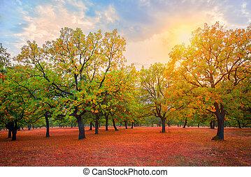 automne, parc, chênes, jour ensoleillé