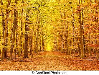 automne, parc, chemin