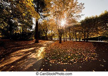 automne, parc, coloré, automne