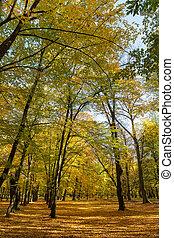 automne, parc, day., ensoleillé, arbres