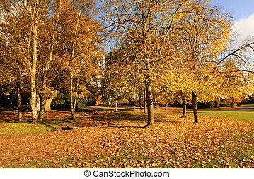 automne, parc, ensoleillé, beau