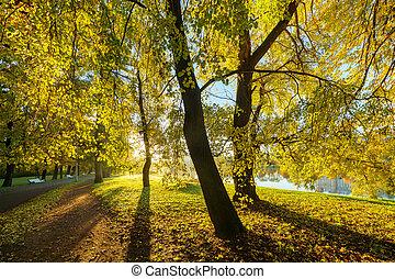 automne, parc, ensoleillé, matin