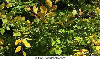 automne, parc, feuillage, coloré
