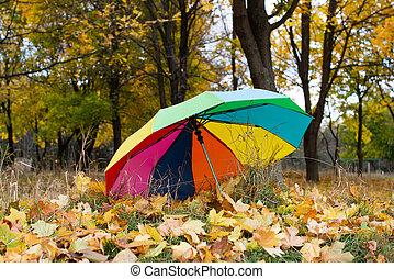 automne, parc, feuilles, parapluie, coloré